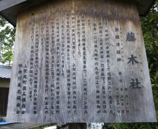 上賀茂神社 藤木社のクスノキ(明神川沿い)004
