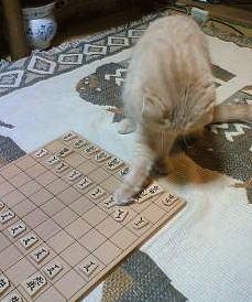 ネコ将棋5