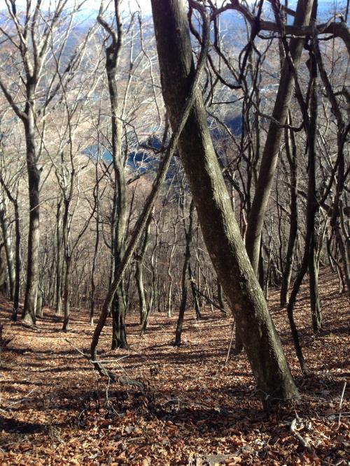 mituzawabunnki41.jpg