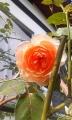 001_20131109085149fab.jpg