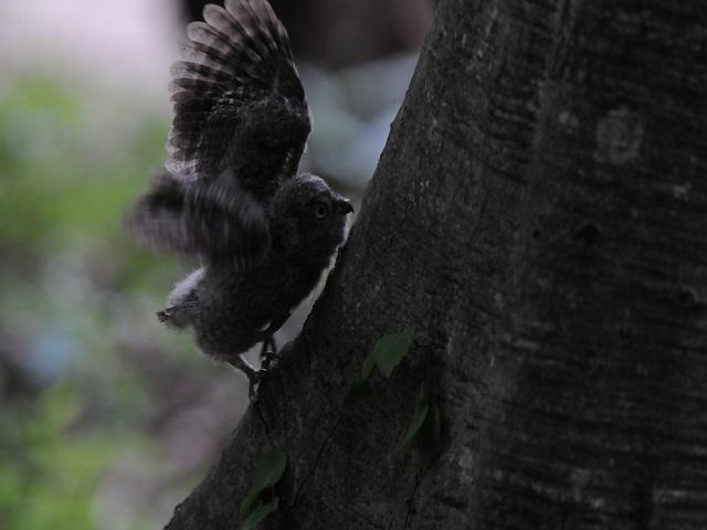 木のぼり6PB