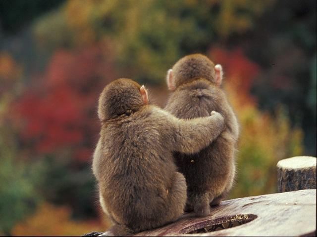 写真後ろ向き猿6