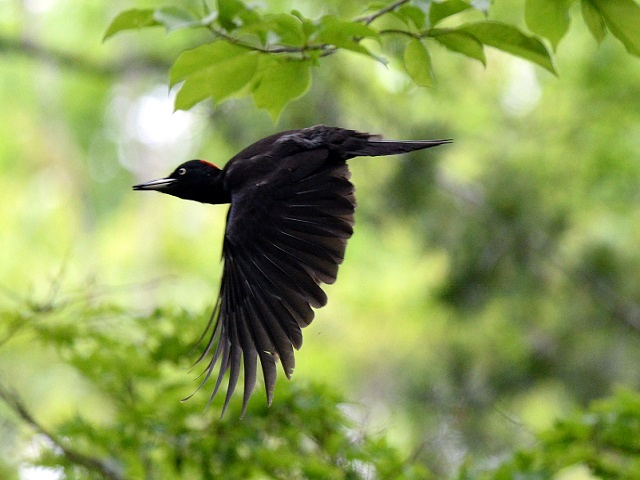 変な鳥飛ぶ6P