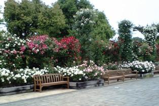 薔薇に囲まれたベンチ♪