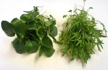 小松菜と水菜の間引き菜