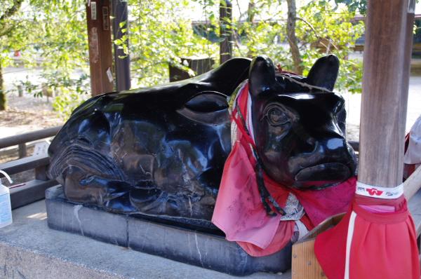2010年8月19日 18きっぷ 京都旅行 牛