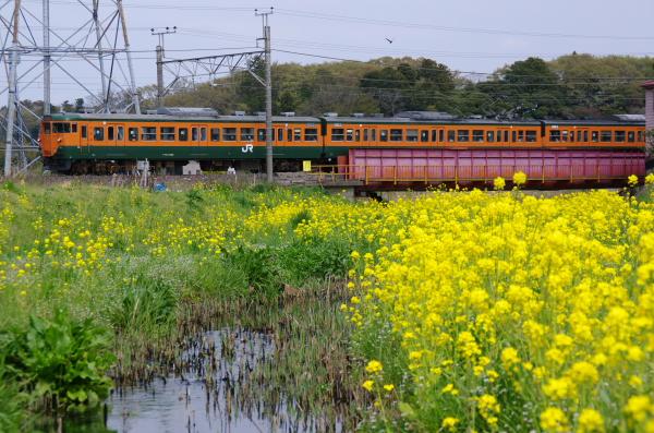 2011年9月11日 菜の花