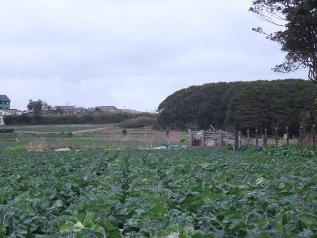 2012年3月18日 銚子旅行 キャベツ畑