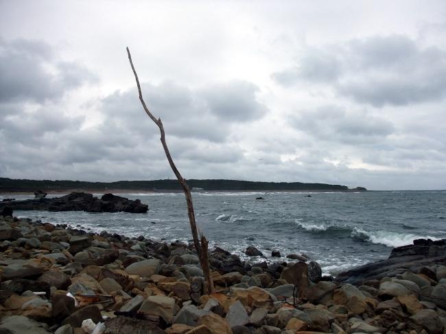 2012年3月18日 銚子旅行 枯れ木