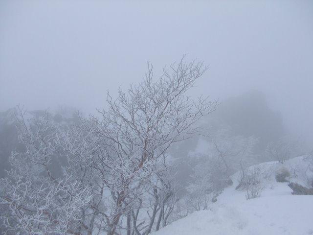 阿弥陀岳南稜H22.1.31② 024