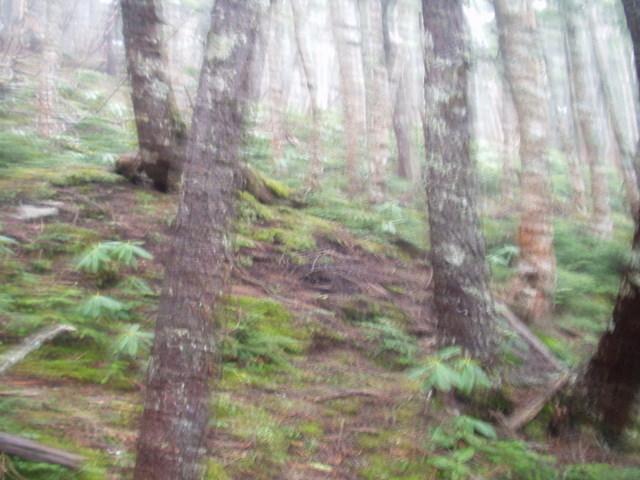 奥秩父-鶏冠尾根~木賊山(鶏冠谷出合~鶏冠山~鶏冠尾根~木賊山)H18・5・20~H18・5・21 019