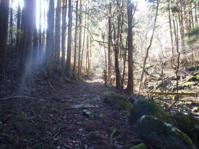 奥多摩ー奥多摩湖~鞘口峠~浅間尾根~払沢の滝H22.12.23 033