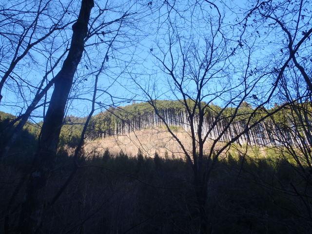 奥多摩ー奥多摩湖~鞘口峠~浅間尾根~払沢の滝H22.12.23 041