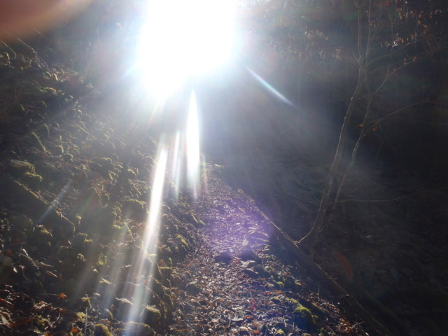 奥多摩ー奥多摩湖~鞘口峠~浅間尾根~払沢の滝H22.12.23 050