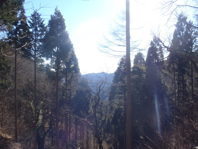 奥多摩ー奥多摩湖~鞘口峠~浅間尾根~払沢の滝H22.12.23 060