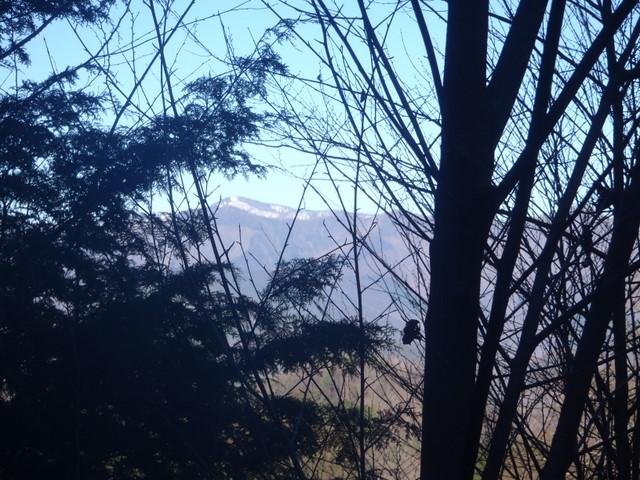 奥多摩ー奥多摩湖~鞘口峠~浅間尾根~払沢の滝H22.12.23 056