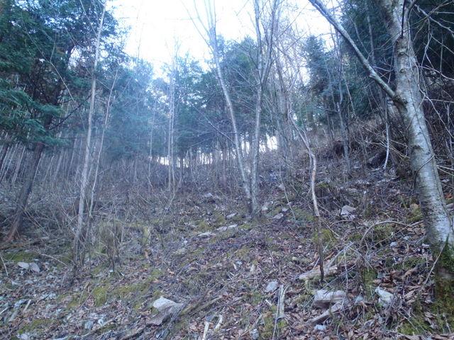 奥多摩ー奥多摩湖~鞘口峠~浅間尾根~払沢の滝H22.12.23 055