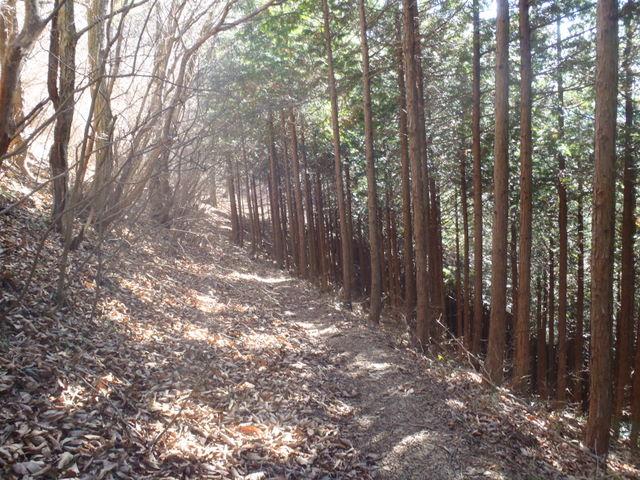 奥多摩ー奥多摩湖~鞘口峠~浅間尾根~払沢の滝H22.12.23 080