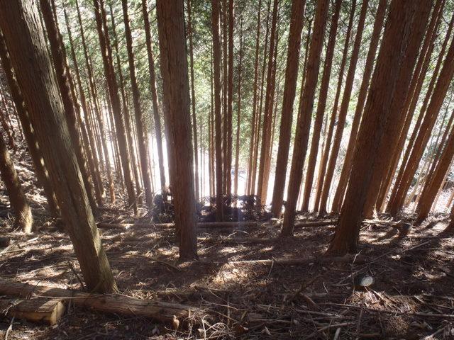 奥多摩ー奥多摩湖~鞘口峠~浅間尾根~払沢の滝H22.12.23 083