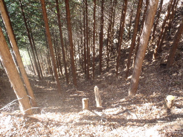奥多摩ー奥多摩湖~鞘口峠~浅間尾根~払沢の滝H22.12.23 082