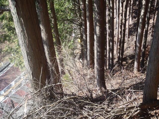 奥多摩ー奥多摩湖~鞘口峠~浅間尾根~払沢の滝H22.12.23 085