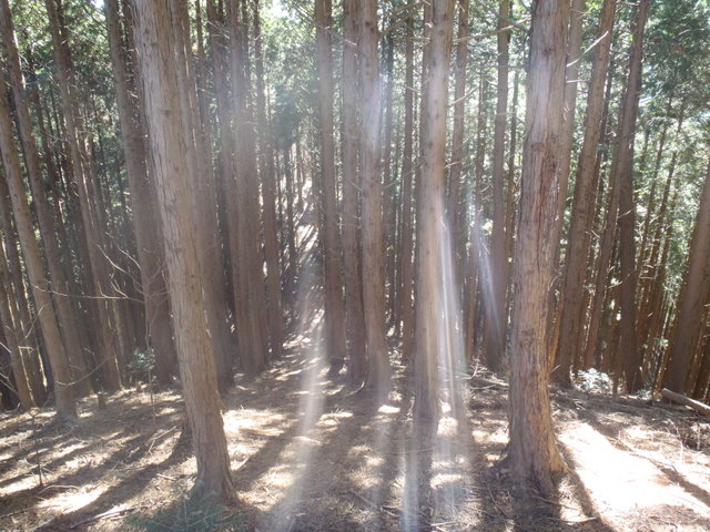 奥多摩ー奥多摩湖~鞘口峠~浅間尾根~払沢の滝H22.12.23 096