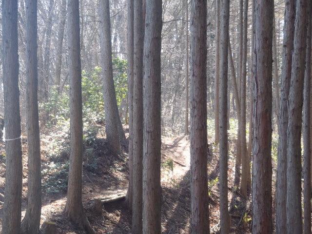 奥多摩ー奥多摩湖~鞘口峠~浅間尾根~払沢の滝H22.12.23 091