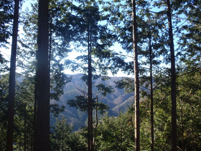奥多摩ー奥多摩湖~鞘口峠~浅間尾根~払沢の滝H22.12.23 098