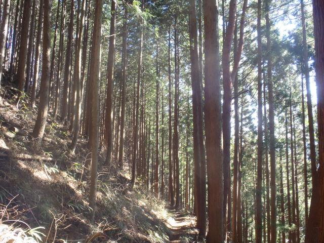 奥多摩ー奥多摩湖~鞘口峠~浅間尾根~払沢の滝H22.12.23 105
