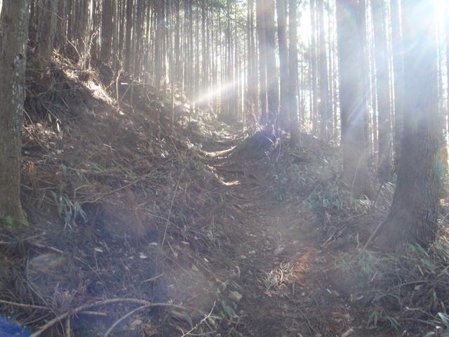 奥多摩ー奥多摩湖~鞘口峠~浅間尾根~払沢の滝H22.12.23 115