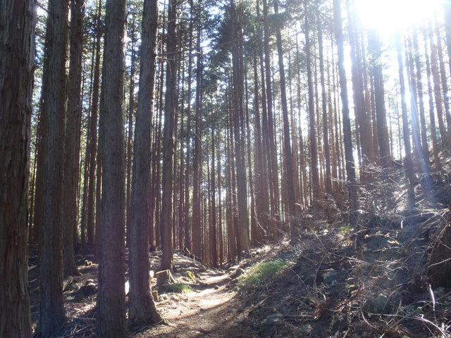 奥多摩ー奥多摩湖~鞘口峠~浅間尾根~払沢の滝H22.12.23 127