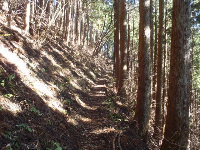奥多摩ー奥多摩湖~鞘口峠~浅間尾根~払沢の滝H22.12.23 123