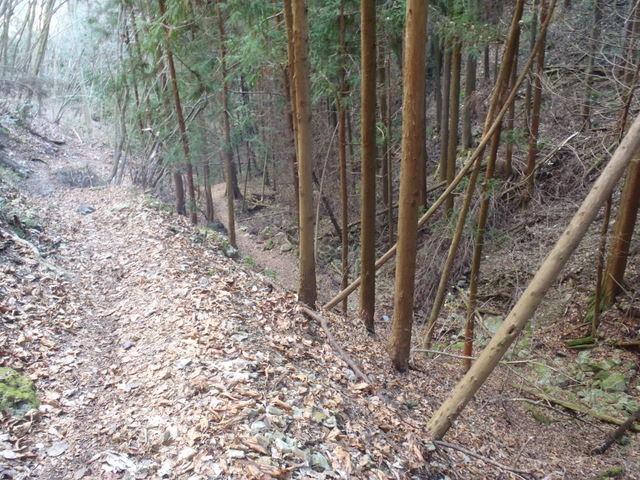 奥多摩ー奥多摩湖~鞘口峠~浅間尾根~払沢の滝H22.12.23 150