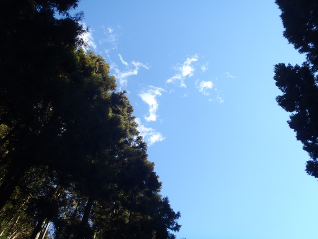 奥多摩ー奥多摩湖~鞘口峠~浅間尾根~払沢の滝H22.12.23 173