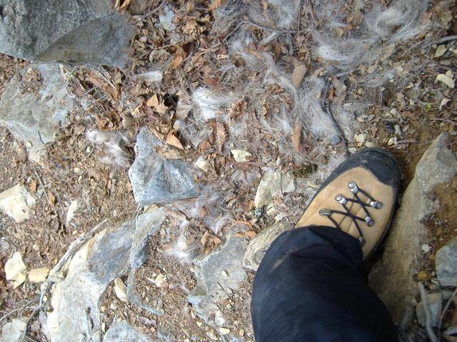 南アルプスー赤石岳(H19・5・3~5) 013