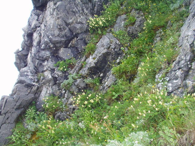 南アルプス-荒川岳(田代~伝付峠~二軒小屋~悪沢岳H16・7・17~19 039