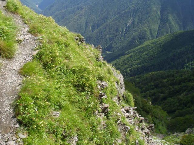 南アルプス-荒川岳(田代~伝付峠~二軒小屋~悪沢岳H16・7・17~19 046