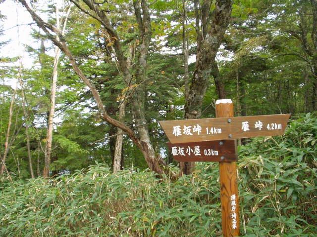 奥秩父-雁峠~雁坂峠(新地平~雁坂峠登山口) 027