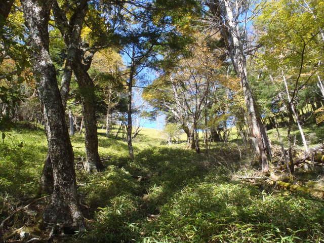 徳和~大ダオ~黒金山~西沢渓谷H23.10.10 088