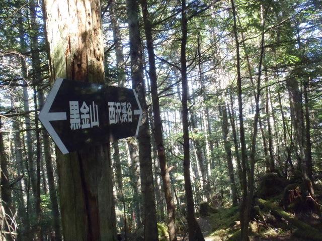 徳和~大ダオ~黒金山~西沢渓谷H23.10.10 142