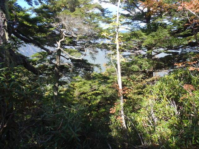 徳和~大ダオ~黒金山~西沢渓谷H23.10.10 174