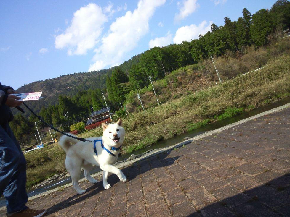 keihokusanpo20130427.jpg