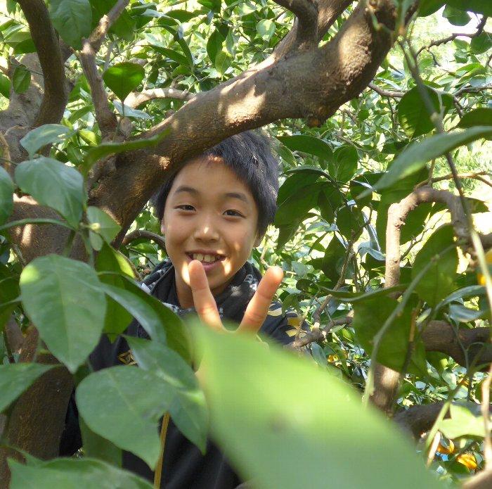木の中ピース