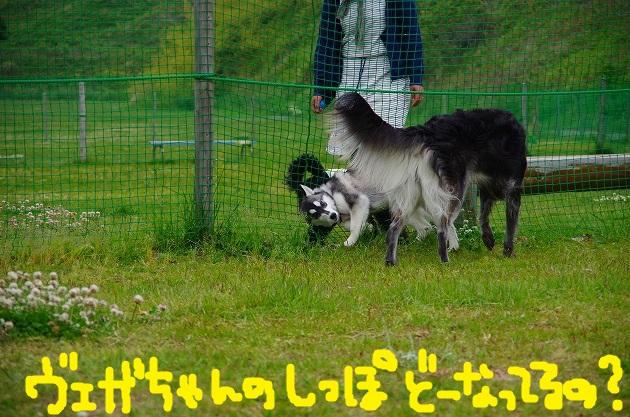 IMGP2687.jpg