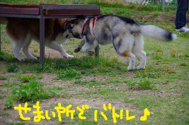 IMGP4251.jpg