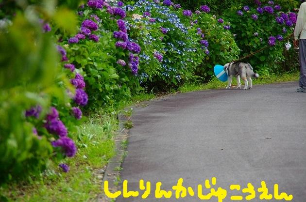 IMGP4781.jpg