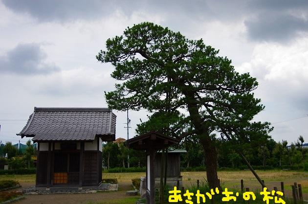 IMGP5268.jpg