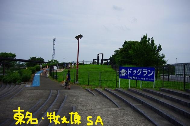 IMGP5371.jpg