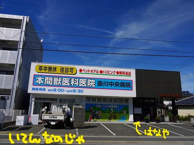 P1380241.jpg