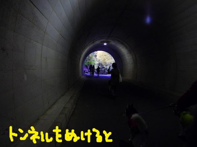 P1400531.jpg